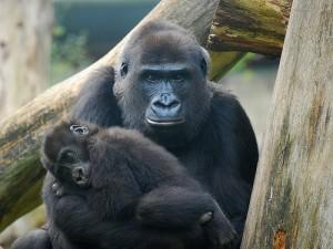 Bimbi in auto? Impariamo dalle scimmie!