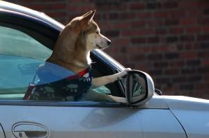 Essere automobilisti in Italia: una vita da cani!