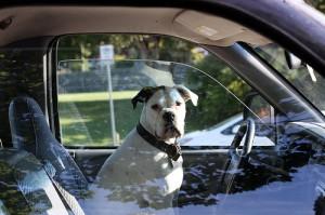 Automobilista: sempre più una vita da cani...