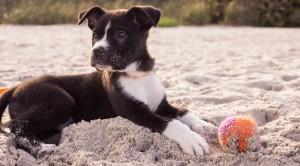 Cane sta male? Il veterinario non può correre